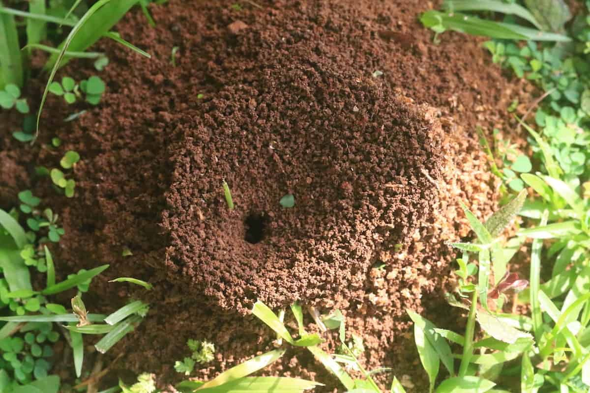 6 Proven Ways To Get Rid Of Ants In Your Apartment