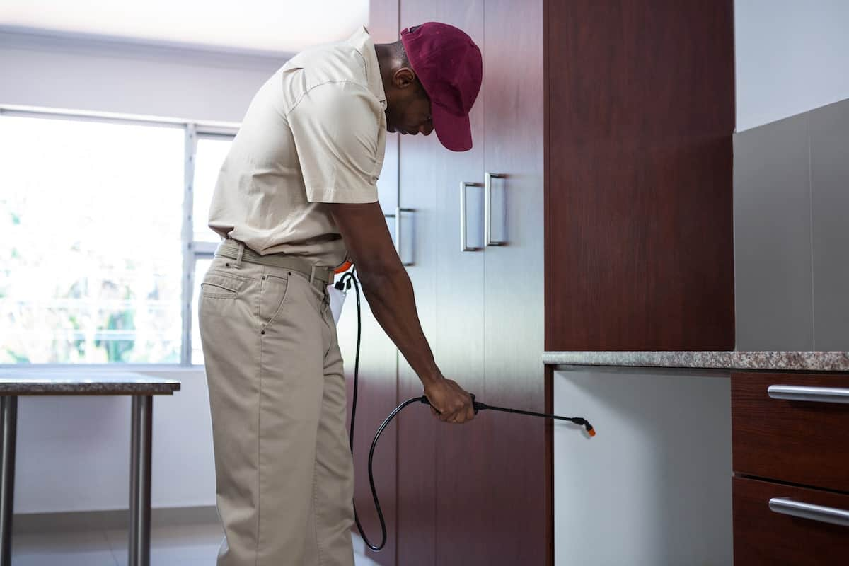Are Tenants or Landlords Responsible for Pest Control
