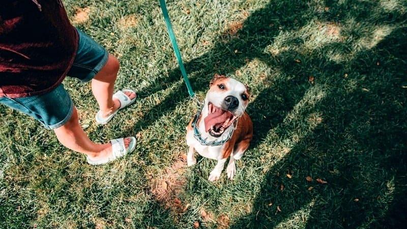 happy dog at dog park