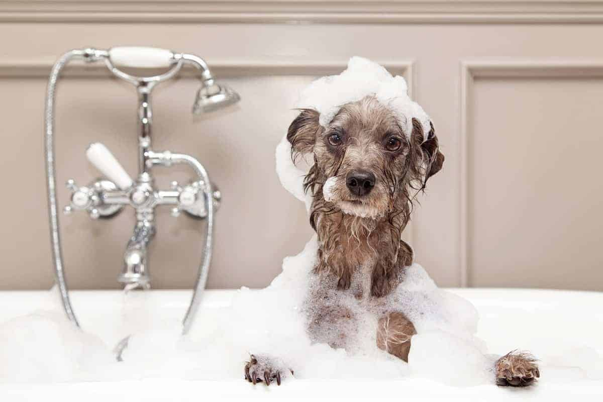 dog bubble bath
