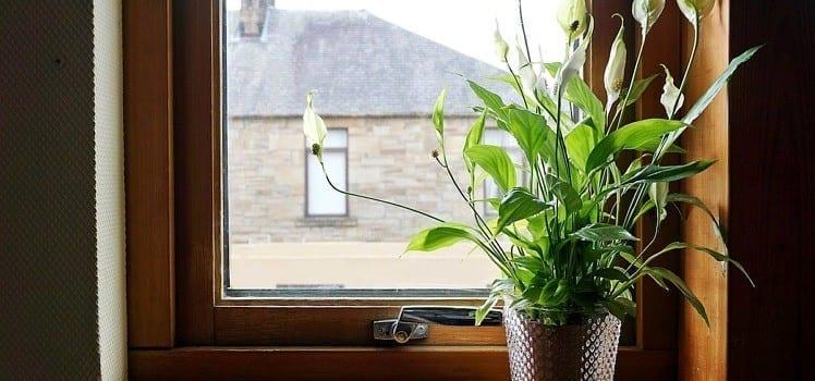 flower in window sill