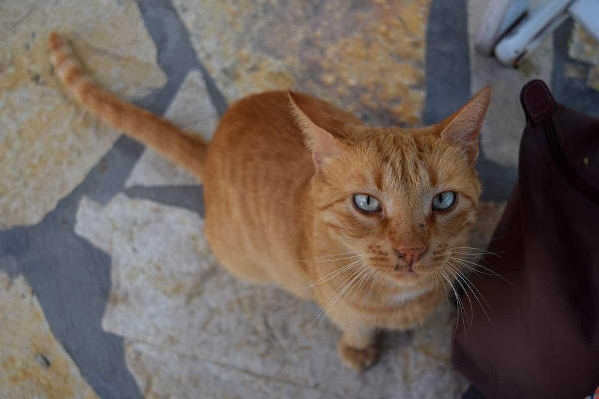 Best Cat Breeds for Your Apartment   ApartmentGuide com