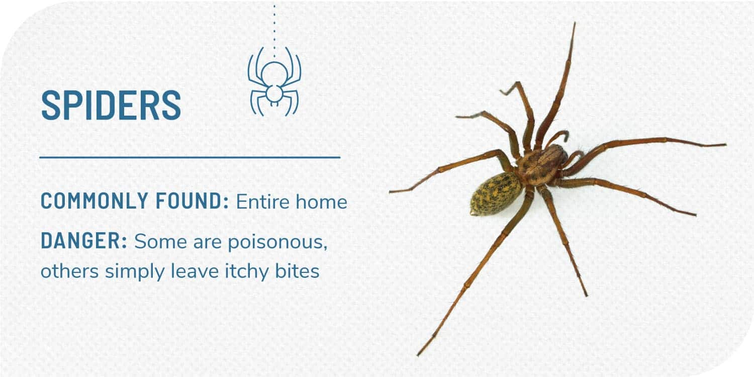 photo of spider and facts about spiders