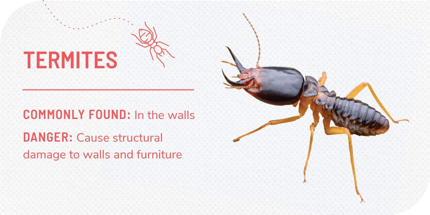 photo of termites and facts about termites