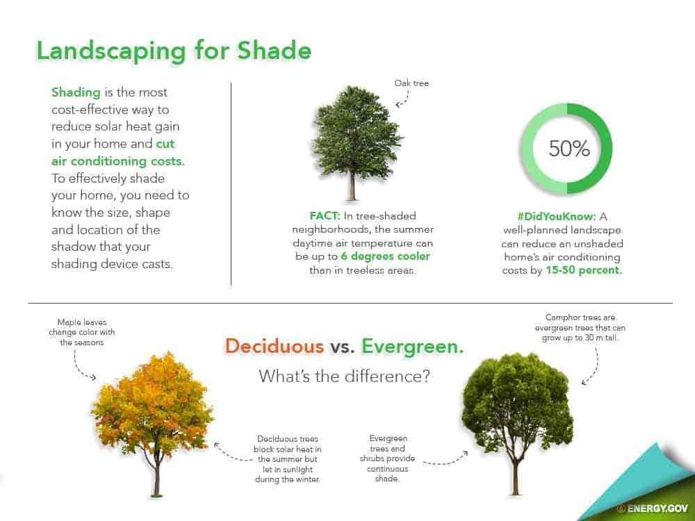 landscaping for shade