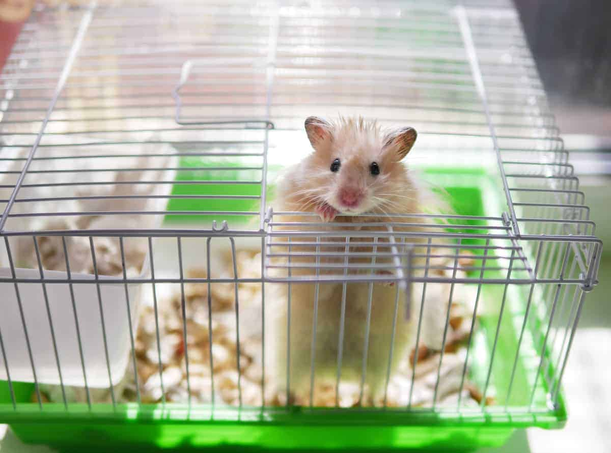 The Best Apartment Pets For College Students Apartmentguide Com