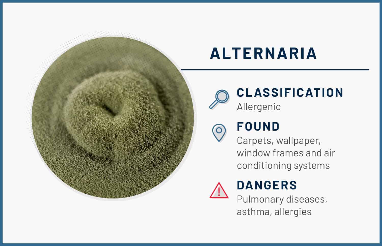 alternaria mold