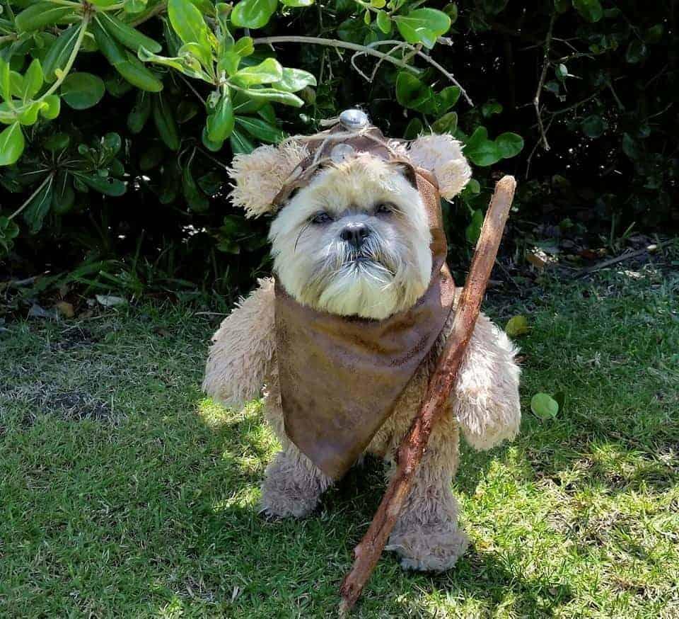 dog dressed as ewok