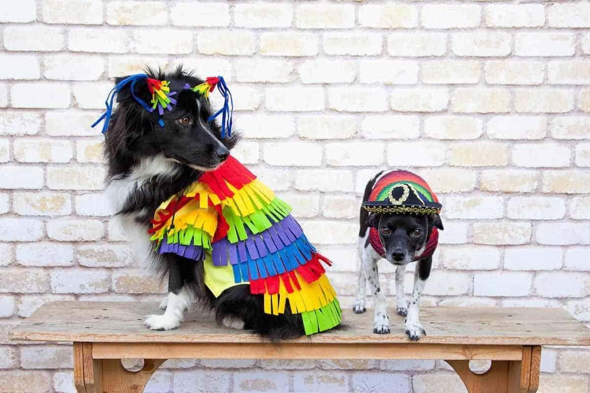 dog dressed as pinata