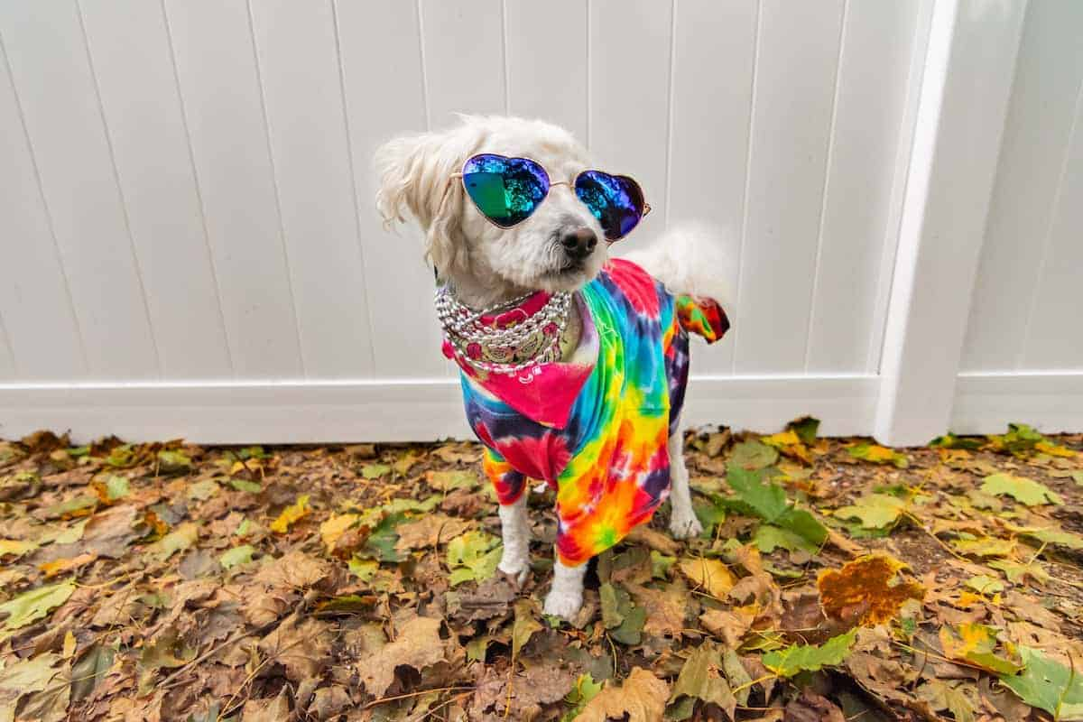 dog dressed as hippie