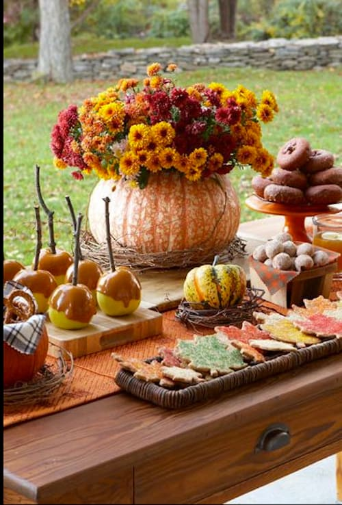 fall mums in pumpkin