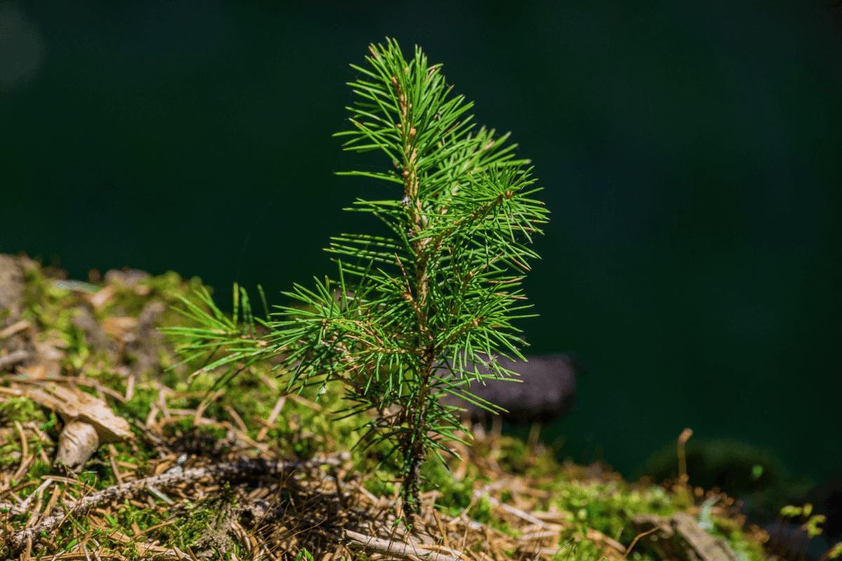 replant your tree