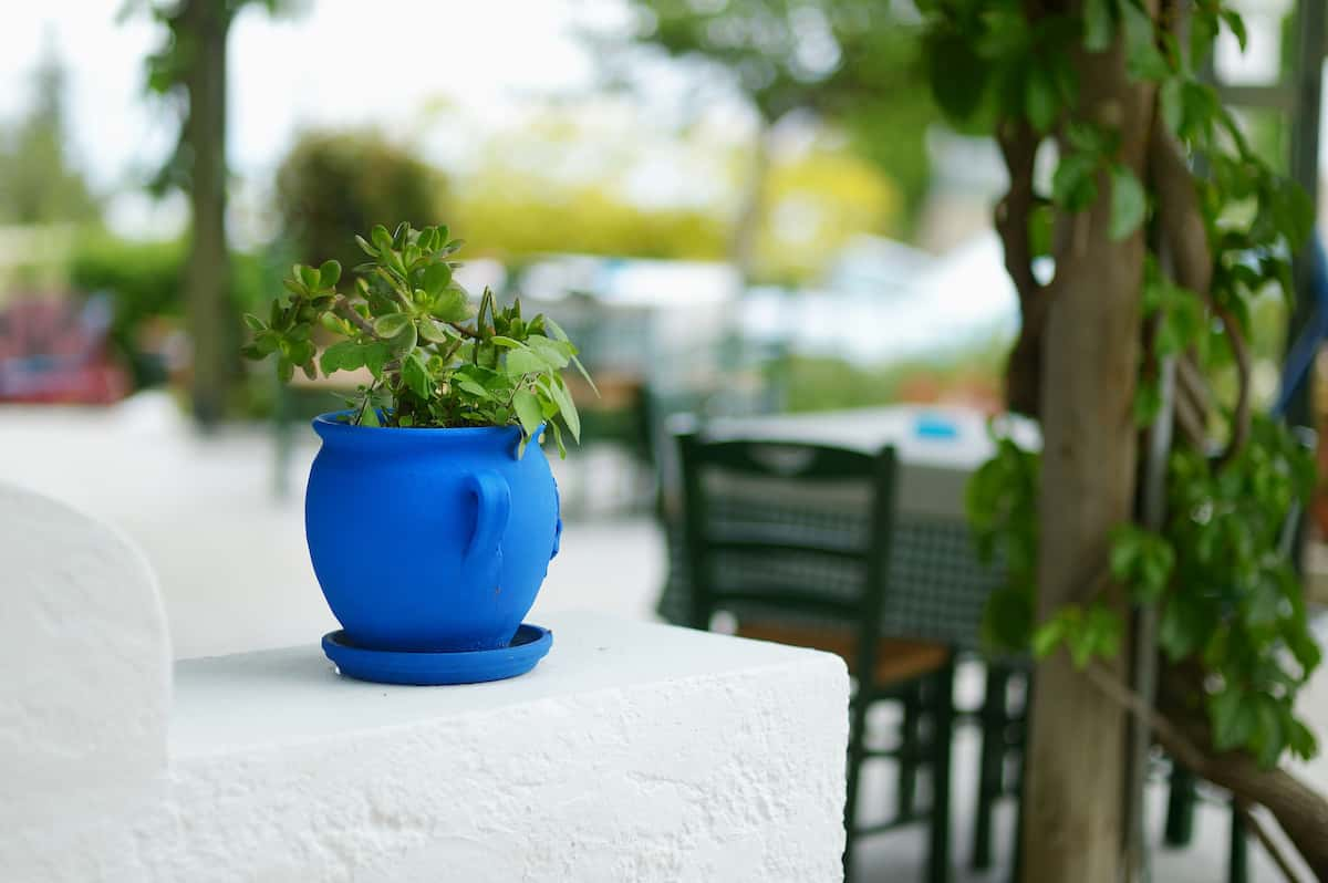 Small plant in a vibrant blue pot on an outside wall