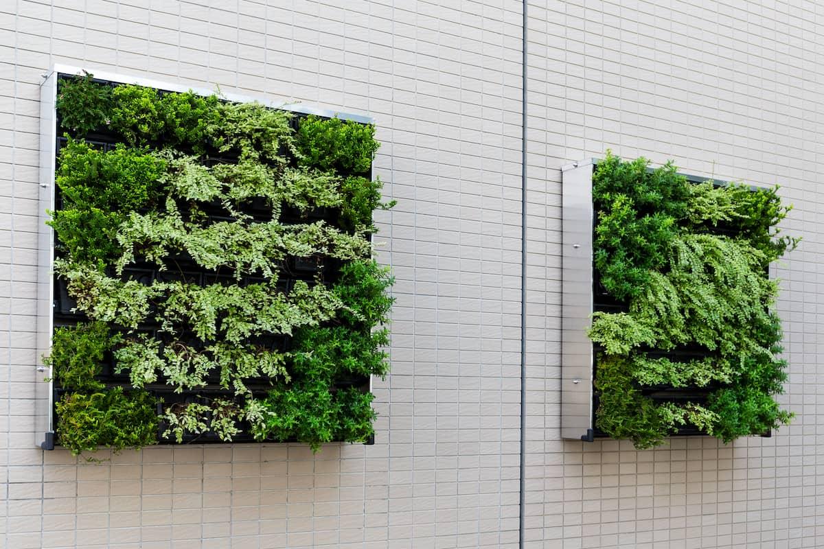 wall with vertical garden