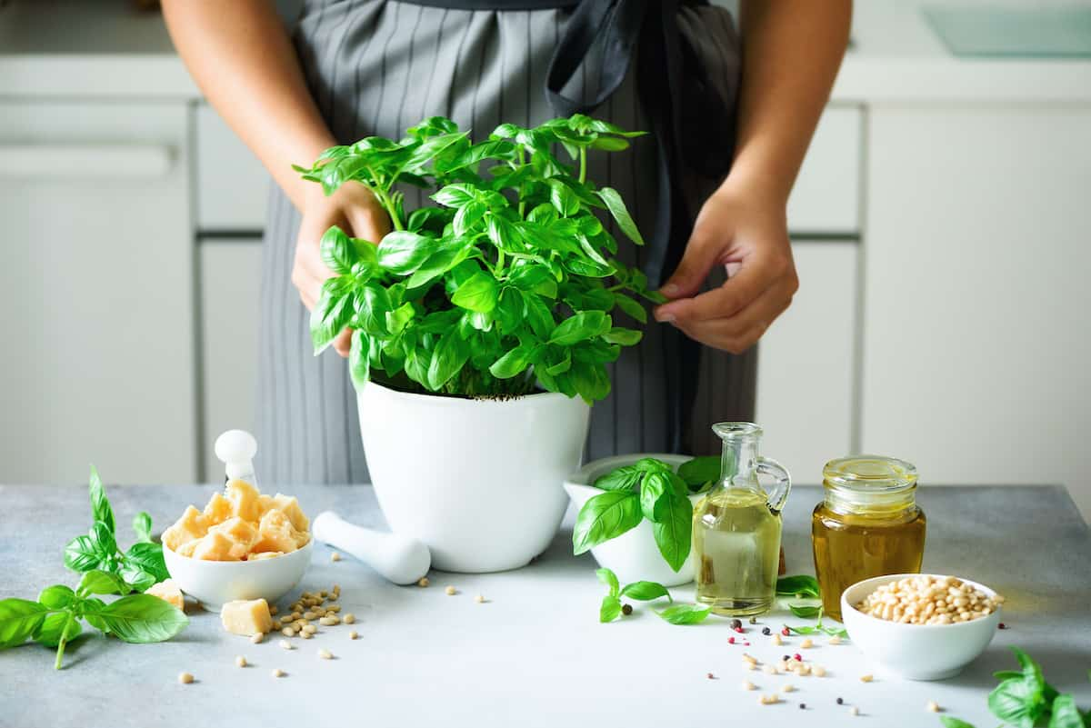 Herbs and Spices basil