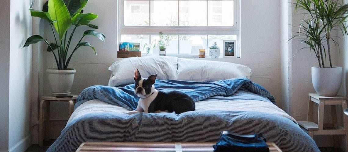 photo that shows dog on the bed