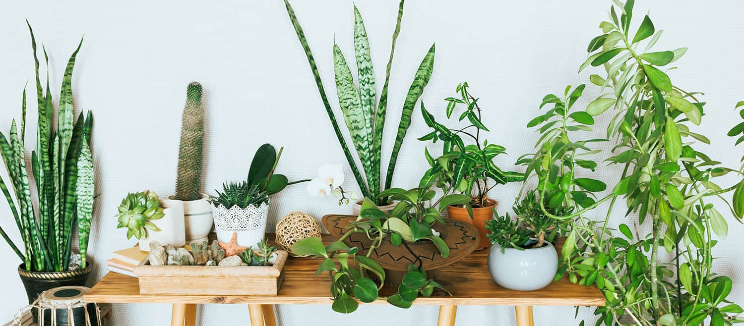23 Best Apartment Plants To Freshen Up Your Space Apartmentguide Com