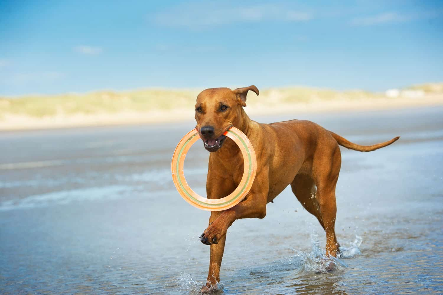 photo showing dog with frisbee