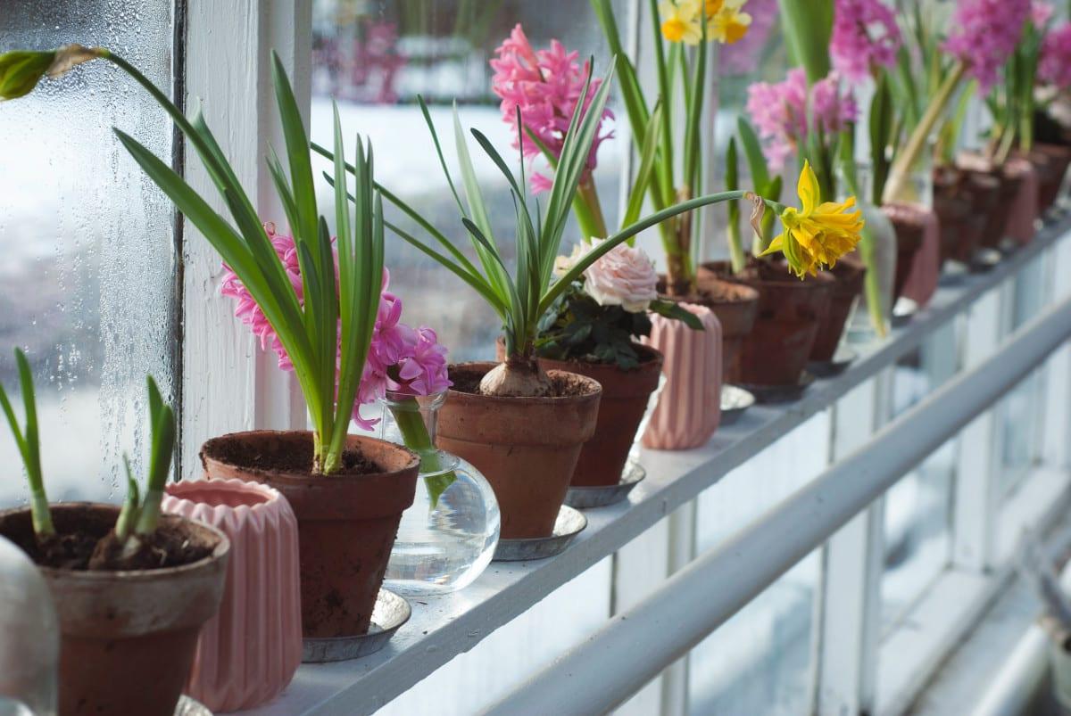 Windowsill of bioliphic plants