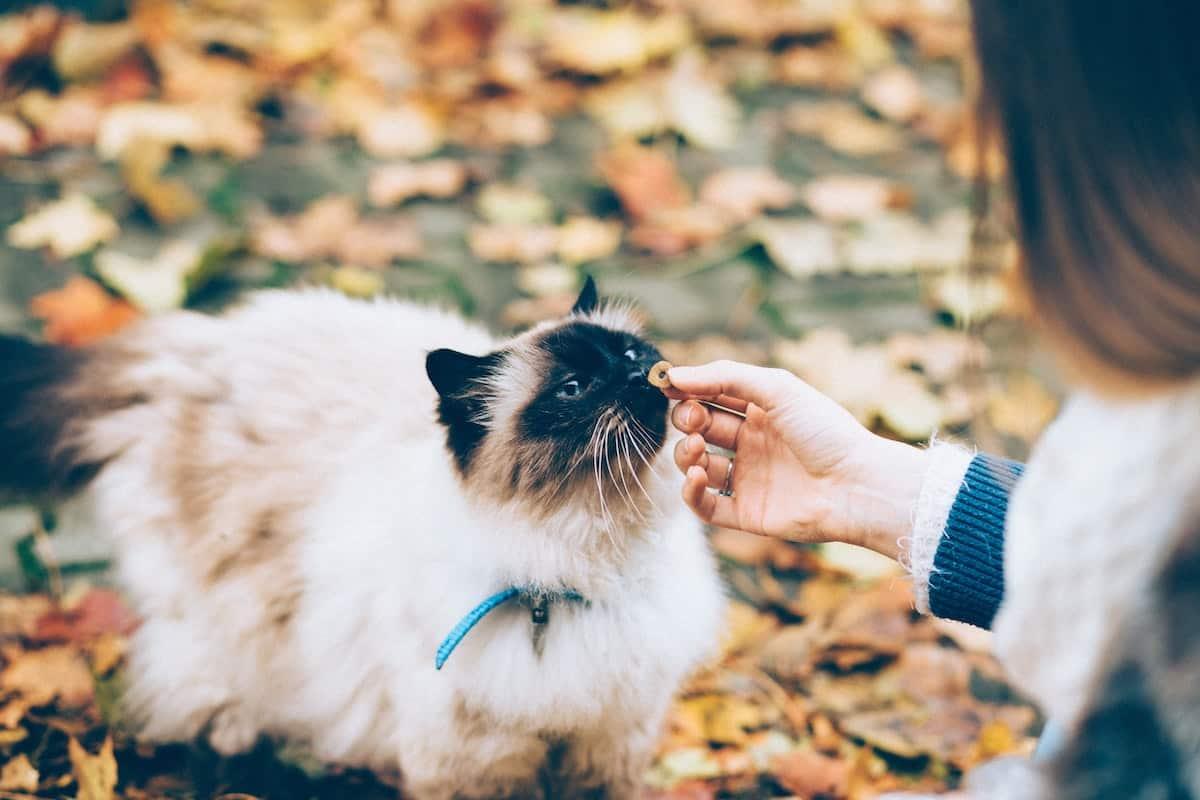 person feeding cat