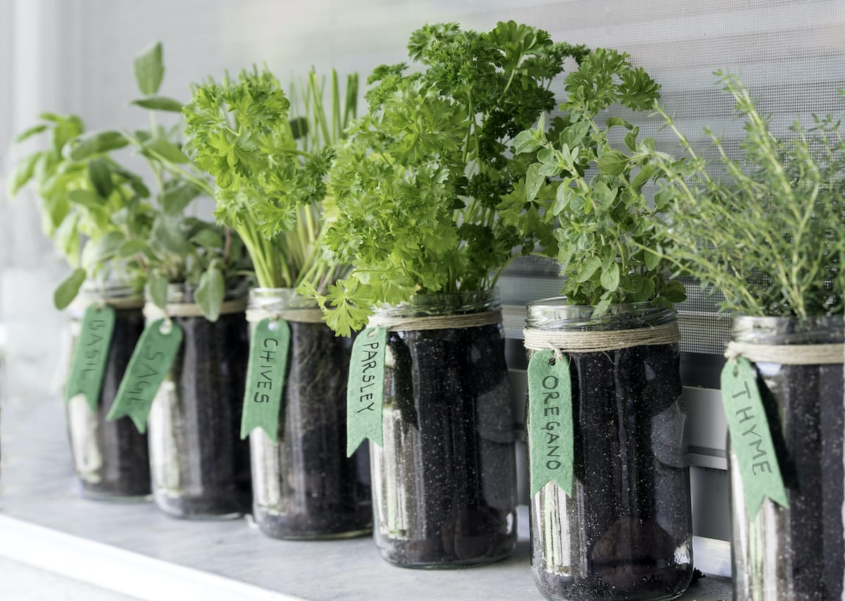 Image of: The Easiest Vegetables To Grow In Your Apartment Apartmentguide Com