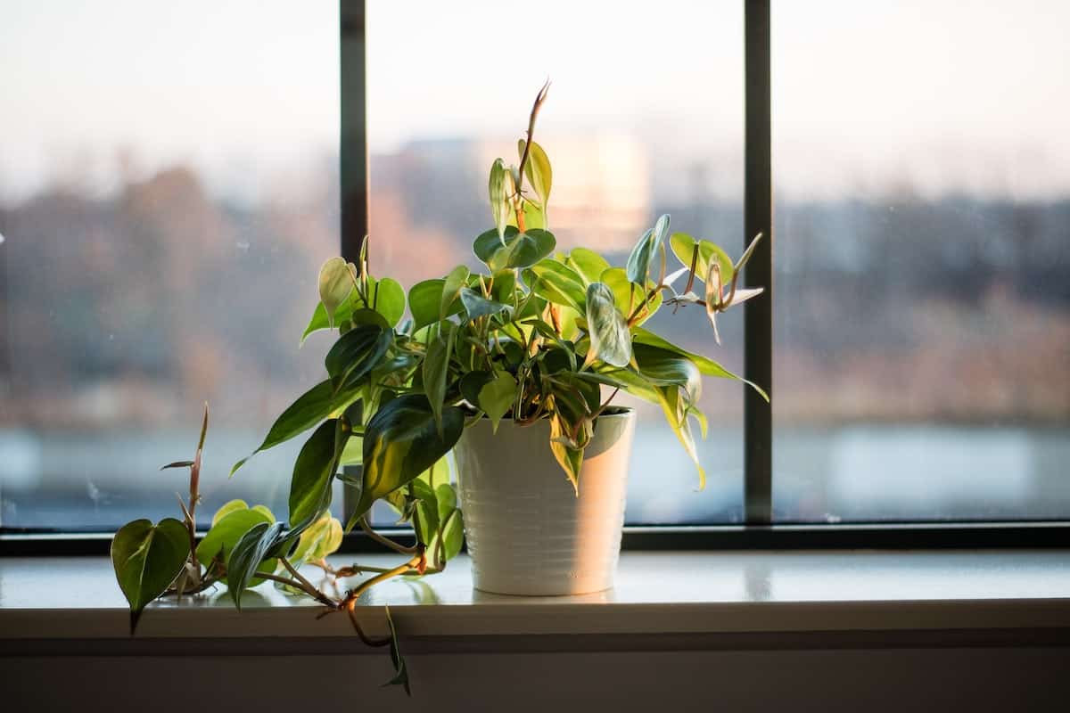 White planter with a green plant sprouting out of it next to a window sill.