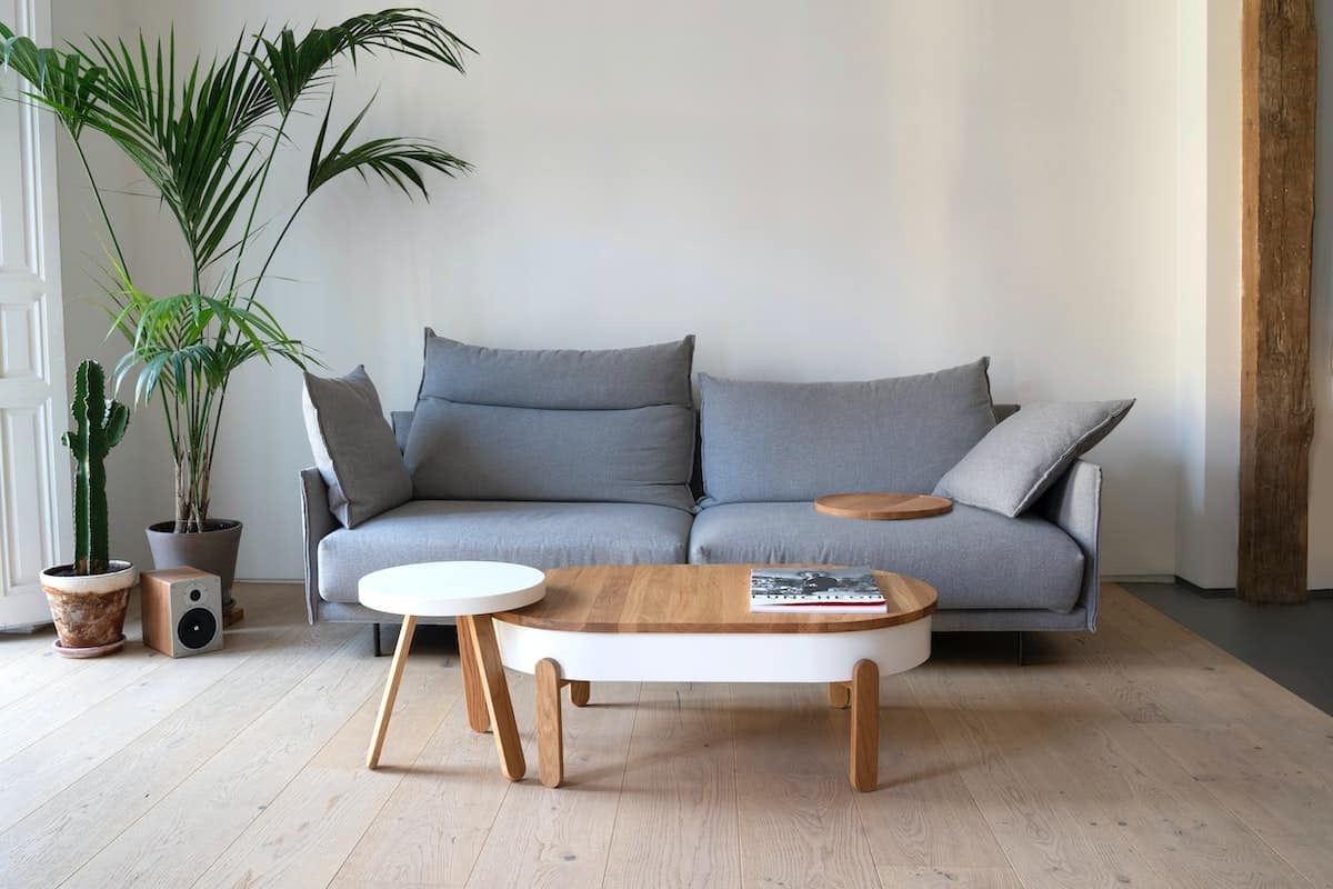 Minimalistic space with a couch and plant.