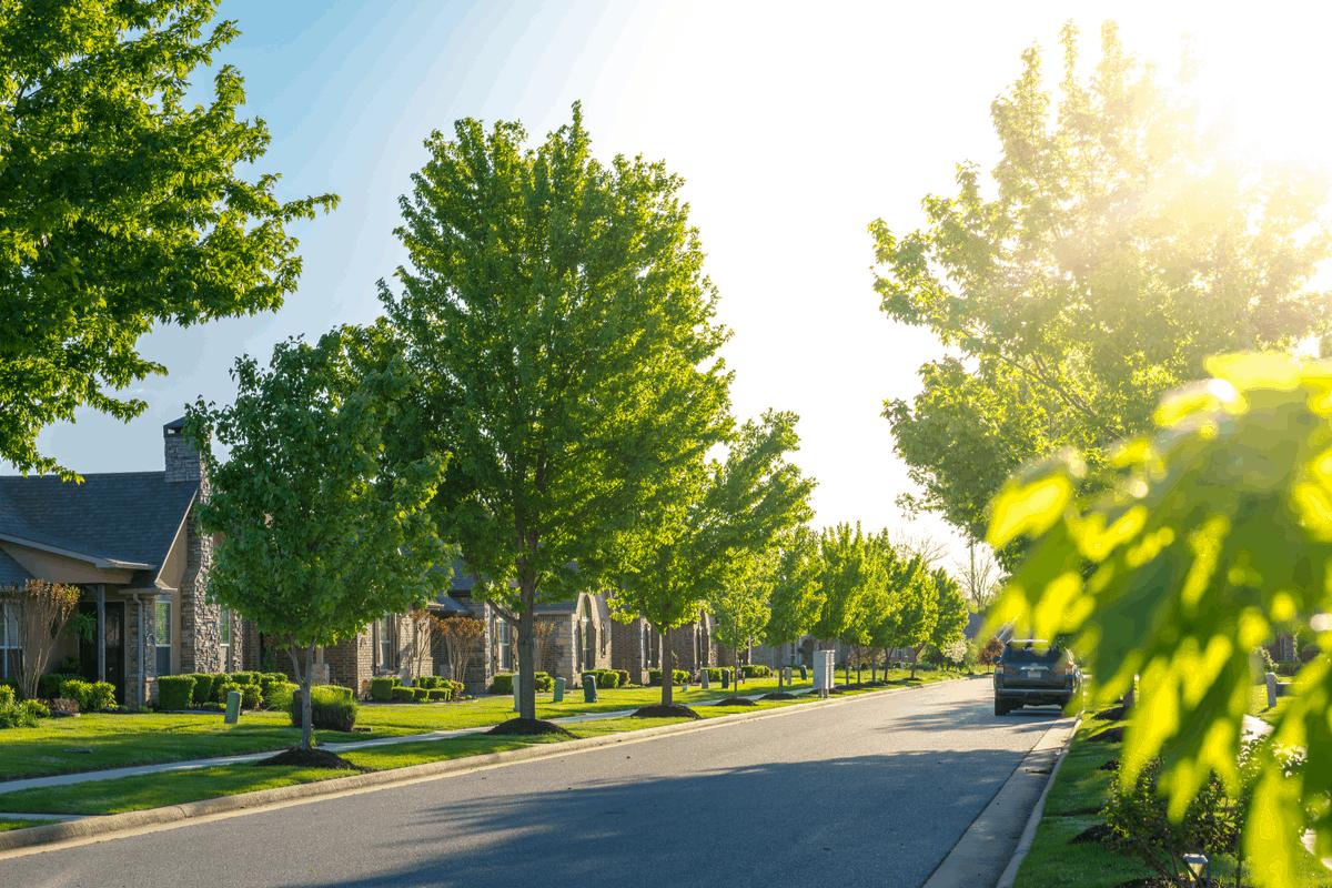 Suburban street.