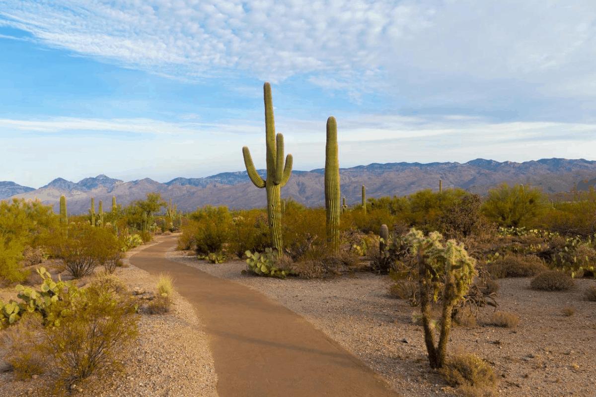 Desert in Arizona.