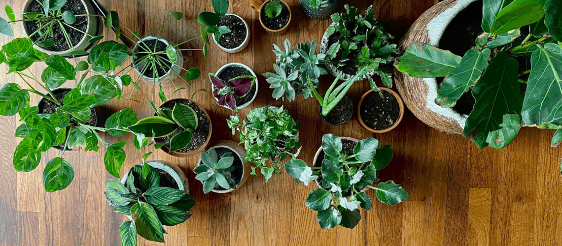 best plants for bathroom